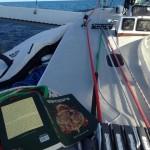 Cruising the Gold Coast